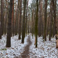 Тропинка в лесу :: Алексей
