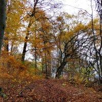 в лесу :: Heinz Thorns