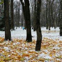 Городской сад в ноябре. :: Милешкин Владимир Алексеевич