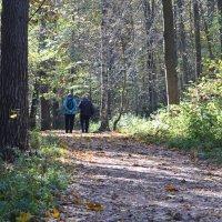 Прогулка в осеннем лесу... :: Наташа *****