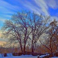 В паутинке ветвей поселилось Небо! :: Елена Хайдукова  ( Elena Fly )