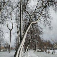 В Петербурге выпал первый снег..... :: Наталия Павлова