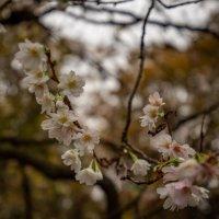 Осеннее цветение :: Николай Гирш