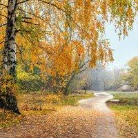 По ковру из березовых листьев.. :: Юрий Стародубцев