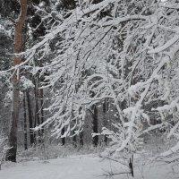 Первый снег. :: Галина