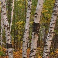 В осеннем лесу :: Александр Велигура