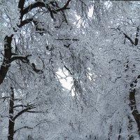 В декабре, в декабре снега много на дворе! :: Наталья (D.Nat@lia)