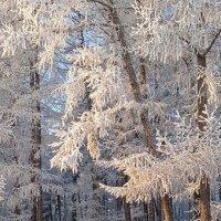 Зима в моём городе :: Nina Karyuk