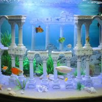 Новый интерьер у рыбок :) :: Эля Юрасова
