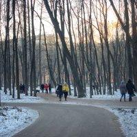Вечер в парке :: Михаил Танин