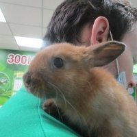 Кролик малыш. :: Зинаида