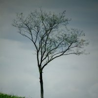 Дерево на склоне :: Вадим Кузнецов