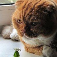 Про кота :: Ирина Румянцева