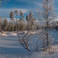 Солнечное утро зимнею порой... :: Татьяна .