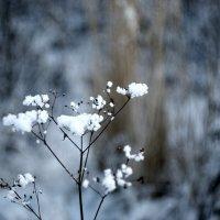зима :: Денис Геранькин