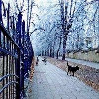 Собачья  стая  декабря!.. :: Евгений