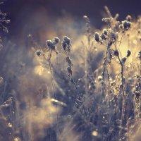 Зимние цветы :: Denis Makarenko