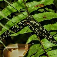 в музее живых бабочек :: Елена Шаламова