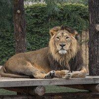 Его Величество на отдыхе :: Игорь Константинов