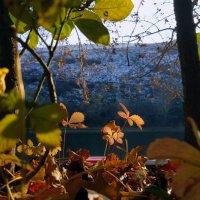 Солнечным днем декабря :: Наталья (D.Nat@lia)