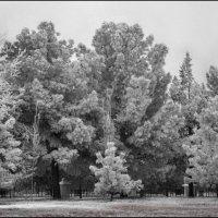 Этой зимой в Ашхабаде :: Ахмед Овезмухаммедов