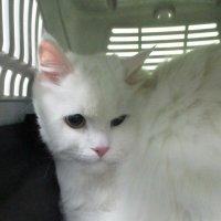 Кошка Сметанка. :: Зинаида