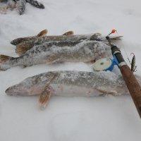 Рыбалка :: александр пеньков