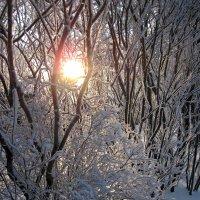 Низкое солнце зимнего дня :: dli1953