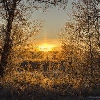 Ожидание прекрасного всегда прекрасно :: Наташа Баранова
