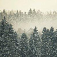 Туманный зимний лес :: Анна Азарёнок