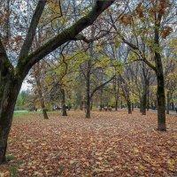 Осенний вечер в парке... :: Сергей Кичигин