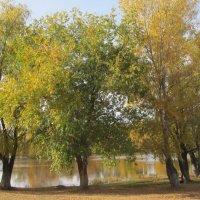 в парке октябрь :: Елена Шаламова