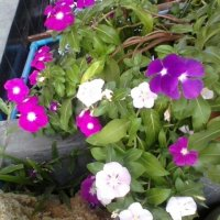 цветочки :: миша горбачев