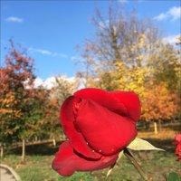 Осень, на носу зима - а я цвету! :: Надежда