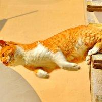Прыжок..... :: Юрий Владимирович