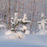 С Новым Годом !!! :: Вера Литвинова