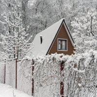А вот и снежок -насыпало... :: Viacheslav Birukov