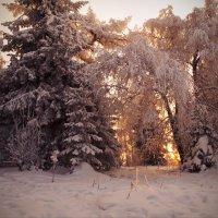 Зимний солнечный день :: Galina Serebrennikova