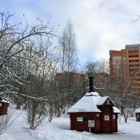 Зимний парк. :: tatiana