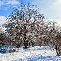 Снежное воспоминание.... :: Варвара