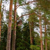 Волшебный лес :: Ирина Руднева