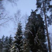 Снежный январь.. :: Tatiana Markova