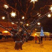 Украшенные деревья на Исаакиевской площади. :: Лия ☼