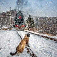 Житель Байкала! :: Алексей Белик