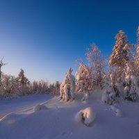 Утренний свет :: Vladimbormotov