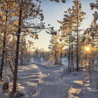 В зимнем лесу :: Дмитрий Иванов