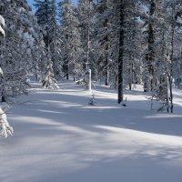 с прогулки по зимнему лесу :: Ларико Ильющенко