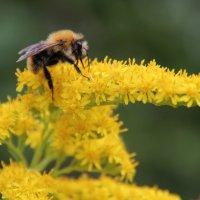 Пчёль)) :: Любовь