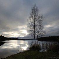 Вечер; Река Свирь; Мандроги :: Laryan1