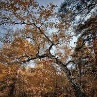 Осень :: SanSan